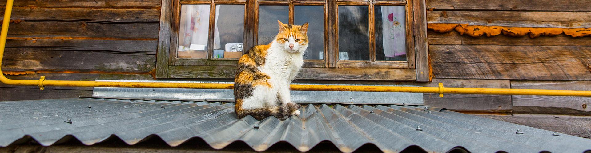 Foto do post O gato subiu no telhado